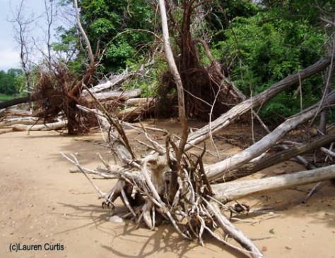 Keyport driftwood (c)Lauren Curtis