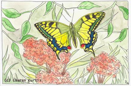 ButterflySm