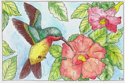 Flowers, Butterfly & Hummingbird pen & ink w/ watercolors (c)Lauren Curtis