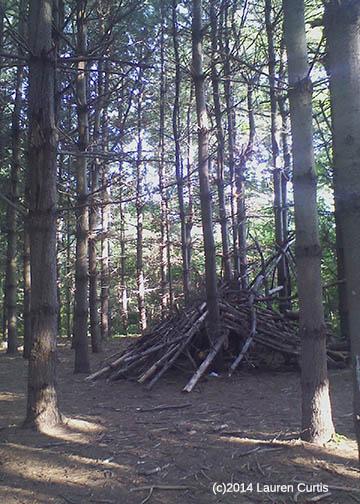 Nj Bamboo Landscaping: Lauren's Creative Corner