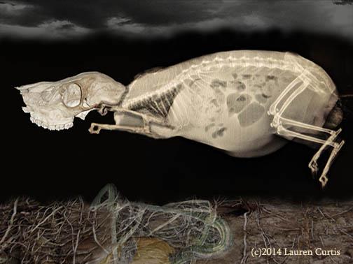 Xray NiteRoot Creature (c)2014