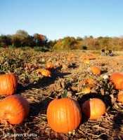 Pumpkinpatch4sm